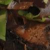 Жареная свинина с чесноком